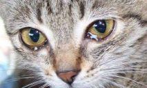 Сбитый машиной кот бьется в конвульсиях и очень нуждается в помощи