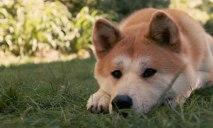 Днепровская Хатико: собаке нужна помощь