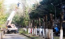 В Днепре незаконно «омолаживали» деревья