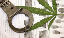 В области обнаружен огромный запас марихуаны