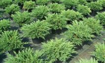 В Днепре высажены растения-убийцы бактерий