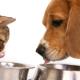 Правильно кормим кошек и собак