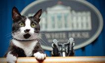 В Днепре живет кот, который сам зарабатывает себе на жизнь