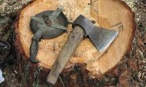 На Днепропетровщине пытаются выяснить, кто вырубил 1000 деревьев