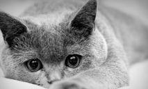 Сильный духом котик борется за жизнь после зверского избиения
