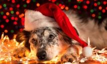 Найдена оригинальная альтернатива новогодней елки для каждого днепрянина