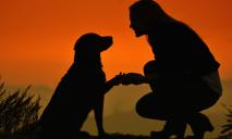 Жертвой жестокой халатности стал породистый пес