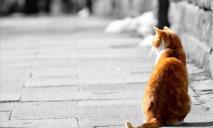 Кота без «лица» выхаживают днепровские волонтеры