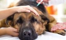 В Днепре участились случаи отравления домашних животных
