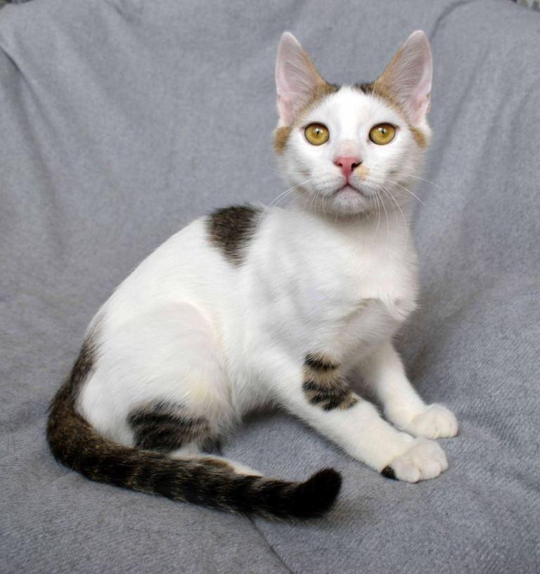 котенок-Боня
