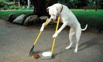 Какая радость может ожидать собаководов Днепра в ближайшее время