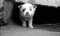 Собаки в опасности: неизвестные живодеры стали промышлять в городе