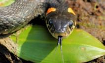 Повышенная опасность: как уберечься от укуса змеи?