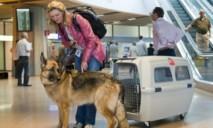 Изменились правила путешествия с домашними животными