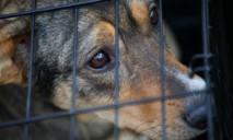 Живодеры Днепропетровщины: собак использовали как корм для котов