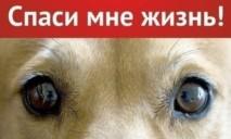 Целый год пес из Днепра ждал помощи от людей и мучился от страшных болей