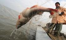 В области задержали около тысячи «черных рыбаков»