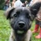 Бездомным собакам Днепра оказали неоценимую помощь