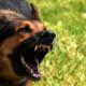 В Днепре собаки нападают на людей, проходящих мимо в медучреждения