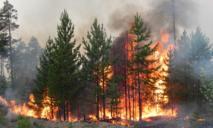 На Днепропетровщине 100 раз горели леса