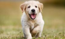 В Днепре массово бросают породистых собак