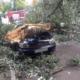 В Днепре дерево раздавило машину