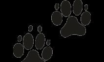 В Днепре спасают щенка на грани смерти