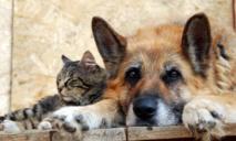 В Украине могут навсегда исчезнуть бездомные животные