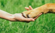 Собака провалилась в ливневую систему: спасательная операция
