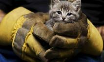 Проведена спецоперация по спасению котенка