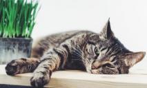 Диагностика и лечение хронического заболевания почек Ваших любимцев в «Элитвет»