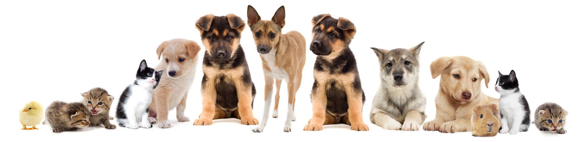 Новости Днепра про Ветеринарная клиника «Ранчо»