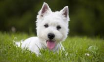 Собаку в Днепре избили и выбросили в люк: как сложилась ее судьба