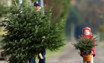 Готовьте кошельки: названы цены на елки в Днепре