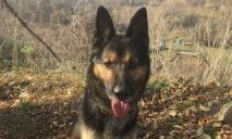 Служебный пес помог в поимке днепрян