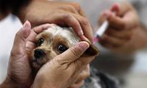 Клиника «Биомир» о профилактике дирофиляриоза у собак