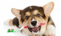 Уход за зубами ваших питомцев – зачем и как это делать?