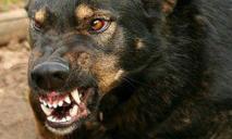 Осторожно: днепрян «терроризируют»  стаи агрессивных собак