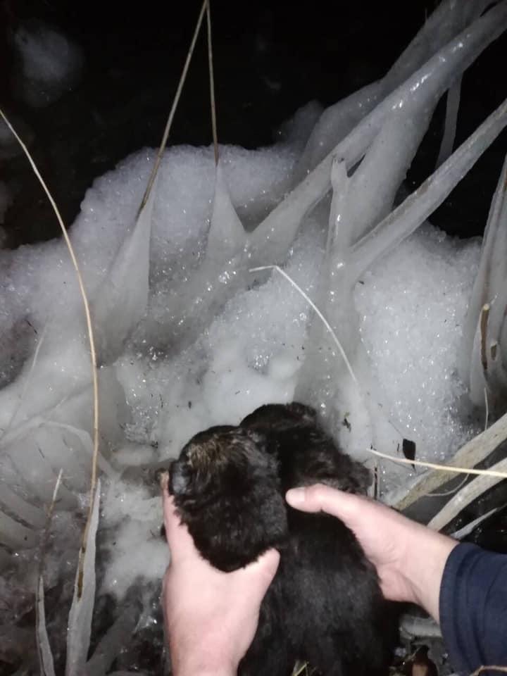Новости Днепра про В Днепре щенков «приговорили» к мучительной смерти