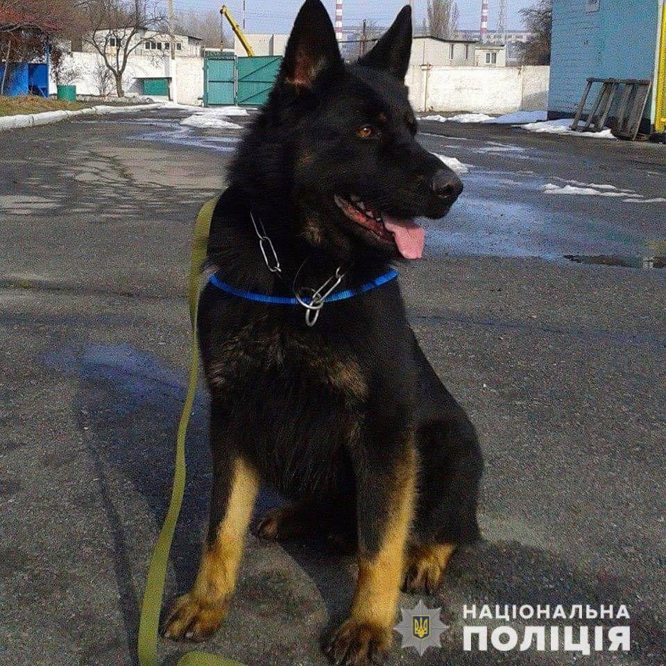 Новости Днепра про Собака «вернула» родителям потерявшегося ребенка