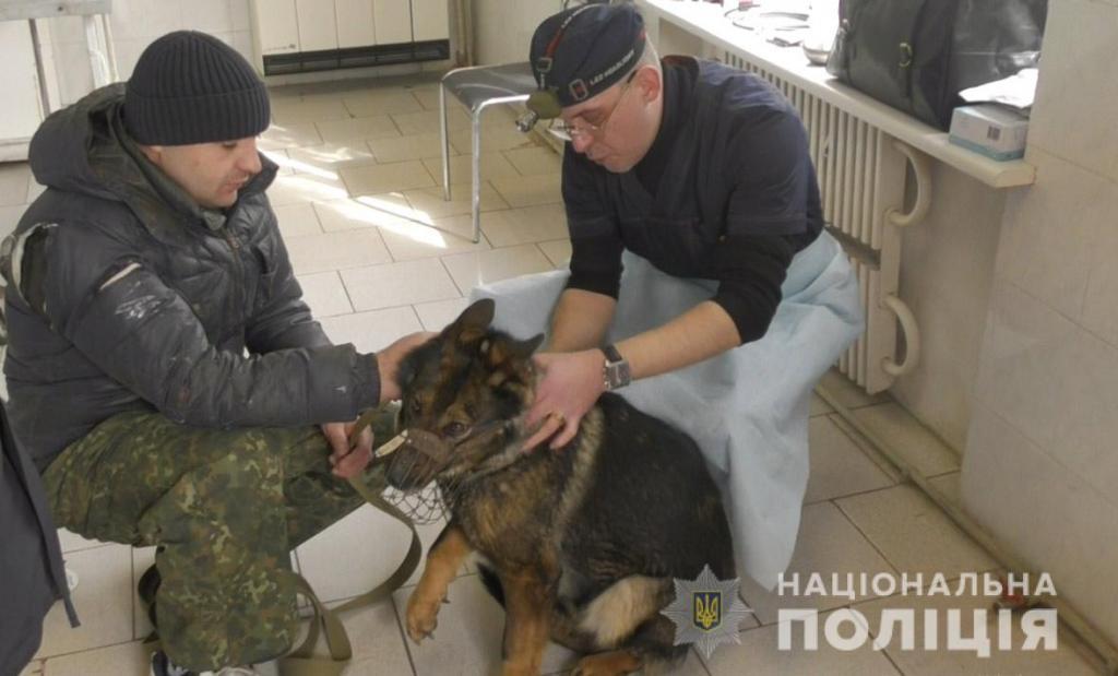 Новости Днепра про В Днепре в необычных условиях спасали служебных собак