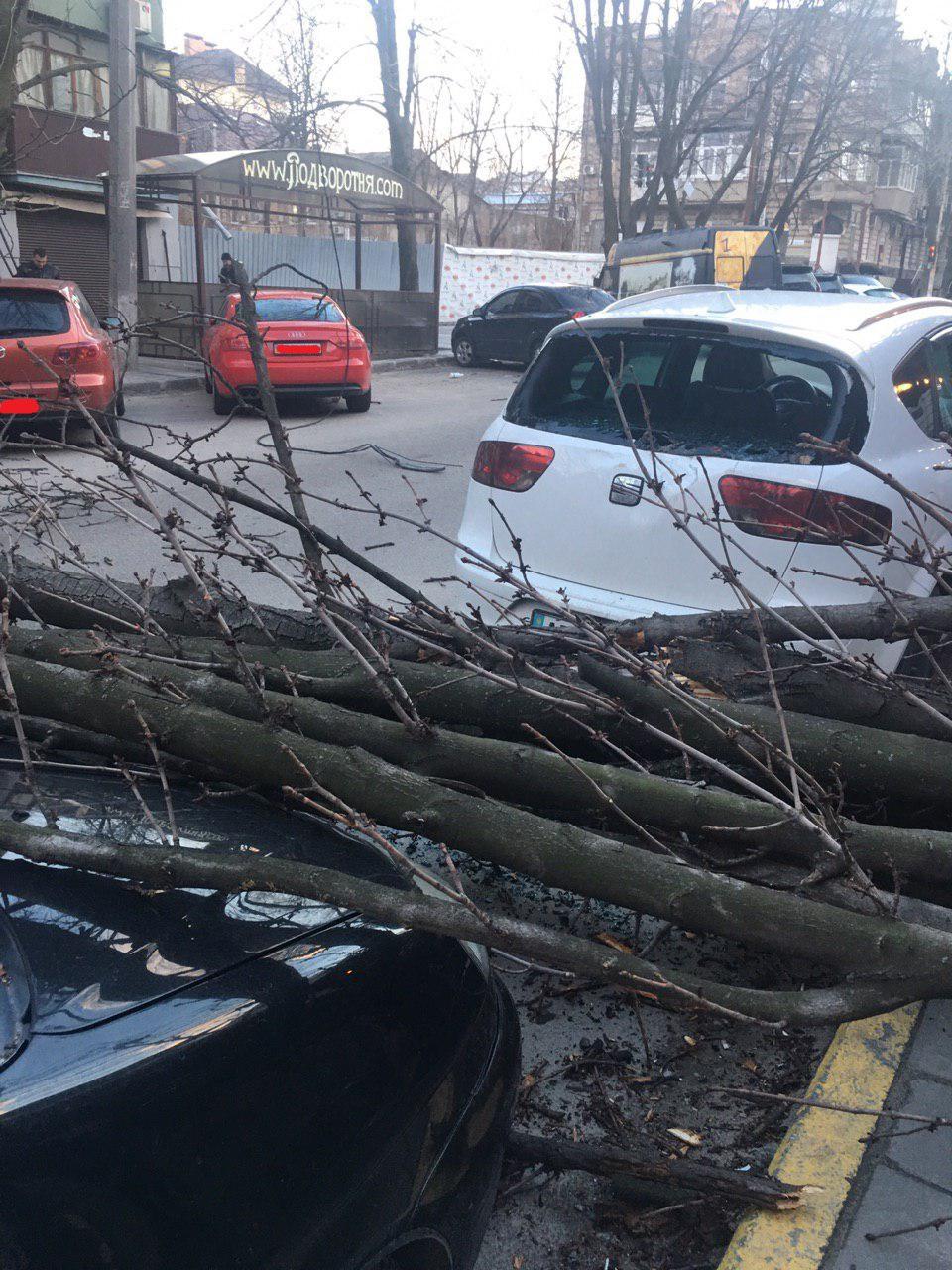 Новости Днепра про В Днепре ветер валит деревья прямо на автомобили