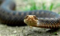 В центре Днепра обнаружили больше десятка змей
