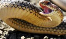 На набережной в Днепре обнаружили огромную змею