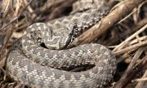 В Днепре в людном месте нашли сразу 18 змей
