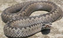 Нашествие змей в Днепре: жителям города «открыли глаза» на ложную опасность