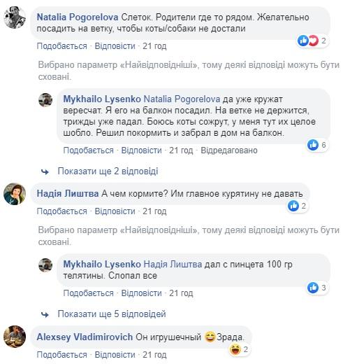 «Новый сотрудник мэрии»: дома у Лысенко поселилась сова. Новости Днепра