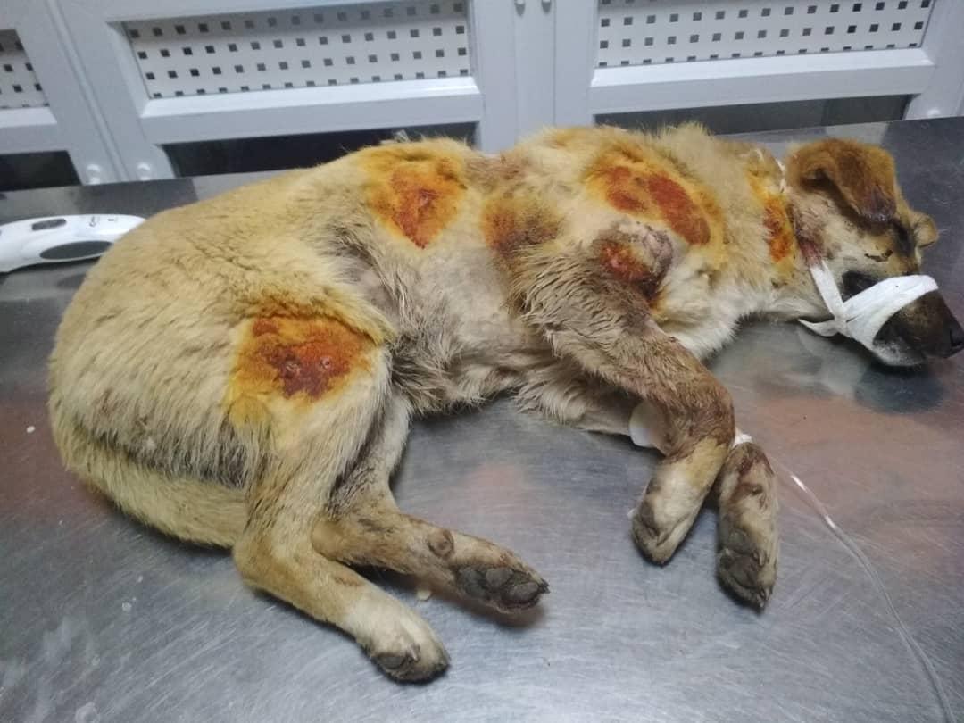 Живодеры расстреляли собак под Днепром. Новости Днепра