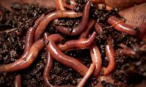 Шокирующая находка: днепрянка нашла в печенье червей