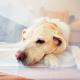 Ветеринарная клиника «Ранчо» – современная хирургия животных и операции любой сложности